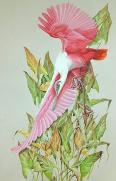 """""""Rosette Spoonbill"""" by LaMay"""