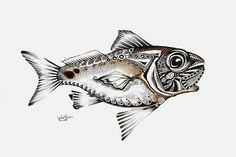 Fine Fish Art Drawings (Originals) from J. Vincent Scarpace, Artist - Works for Sale