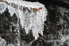 Frozen Branch by LKB Art and Photography, FAA