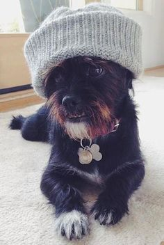 Instagram's cutest animals EVER - If we ever move somewhere cold, Brillo needs this hat!