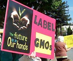 After Vermont Passes GMO Labeling Law, Food Industry Announces Plans To Sue - Cornucopia Institute