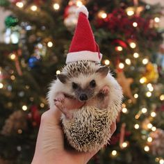 1203 Best Christmas Animals Images In 2019 Christmas Animals