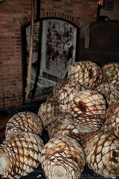 """Agave Piñas""- These agave piñas are used in making tequila, near Puerto Vallarta, Mexico 