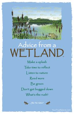 """Take time to reflect."" Advice from a Wetland. So much hidden beauty within a Wetland. Your True Nature Advice Quotes, Life Advice, Good Advice, Advice Cards, Quotes To Live By, Life Quotes, Frog Quotes, Animal Medicine, True Nature"