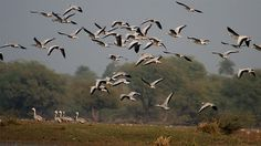 Bharatpur National Park : Home to over 300 species of birds, Keoladeo Ghana National Park popularly known as Bharatpur National Park, is situated near Bharatpur in eastern Rajasthan. The park lies between two of India's tourism centres – Agra and Jaipur – about 190 km from Delhi.  Keoladeo is just two km from the erstwhile royal capital of Bharatpur, termed as the 'Eastern Gateway to Rajasthan'.
