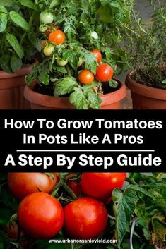 In this article, we'll take a closer look at popular types of tomatoes to grow. - gardening - In this article, we'll take a closer look at popular types of tomatoes to grow in containers, and - Types Of Tomatoes, Growing Tomatoes In Containers, How To Grow Tomatoes, Tomato Types, Growing Tomatoes Indoors, Growing Vegetables In Pots, Growing Tomatoes From Seed, Tomato Tomato, Tomato Rice