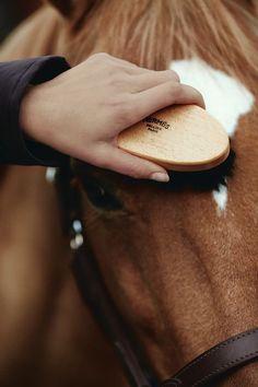 The Horse at Hermès.   Pansage.   Photo: Giampaolo Vimercati   #Horse #Hermes #Equitation