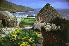 An Cro Mor/ Sheep's Pen on Great Blasket Island, Co.Kerry. Via Ireland and Peg's Cottage FB page.
