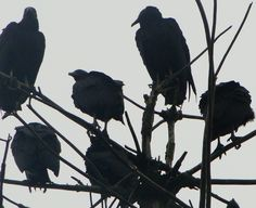 birds, black, and dark image Necromancer, Paladin, Gwendolyn Shepherd, Elf Rogue, Half Elf, L Death, The Wicked The Divine, Le Cri, Jonathan Crane