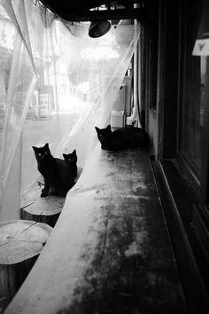 黒猫カウンター会談