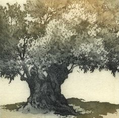 Old Olive Tree, etching by Chrissy Norman, UK, Image size 12 x 12cm      Edition 60 Spotted on a holiday in Provence.
