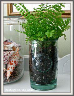 fern planted in vintage glass #diy