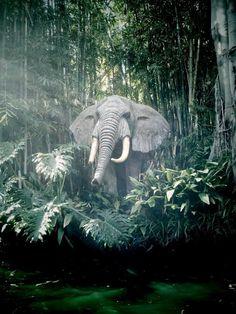 The Mighty Elephant - The Jungle Cruise Disney Films, Disney Parks, Walt Disney World, Disney Land, Vintage Disneyland, Disneyland Paris, Jungle Cruise Disneyland, Jungle Pictures, Walt Disney Imagineering