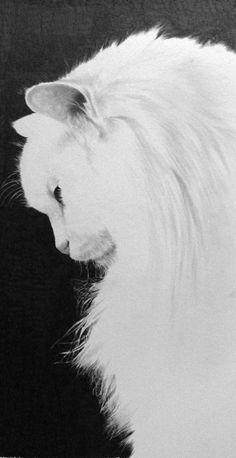 • Inspiration //  #PaulLung (Drawing pencil)