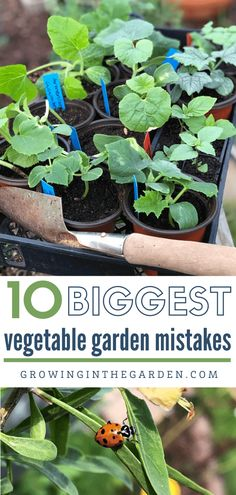 I'll be the first to admit, I've made most of the vegetable gardening mistakes on this list. Learn from my mistakes and avoid making your own. Planting Vegetables, Growing Vegetables, Vegetable Gardening, Veggie Gardens, Growing Tomatoes, Veggies, Madison Square Garden, Starting A Garden, Seed Starting