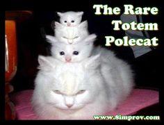 Funny Cat Pic