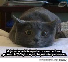 Groźny koteł