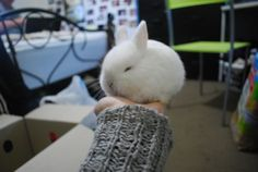 Palm-Size Bunny - August 17, 2011