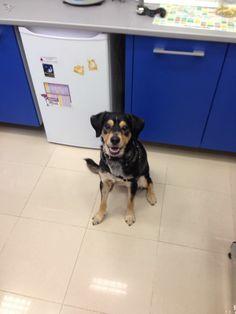 Lula está con traqueitis. Pero eso no le quita las ganas de venir contenta al #veterinario