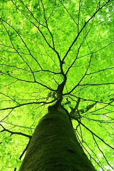 tree trunk. green leaves. exquisite shapes.