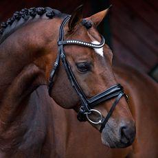 Hööks Hästsport - Allt för ryttare, häst och hund! Ridkläder Hästutrustning Hundprodukter - Aachenträns Aurora Gold Medal®