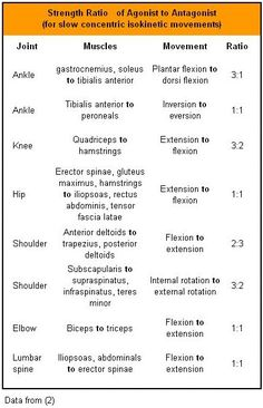 agoistantagonist muscle pairs  massage  pinterest