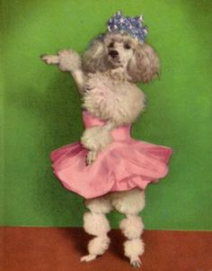 inspiration....have to make this poodle..lol