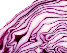 red cabbage up close