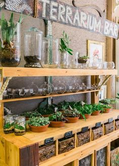 garden shop Have you ever been to a store with a terrarium bar The Bleached Butterfly near Ocean City has one, and were dying to go make our first creation! Garden Nursery, Plant Nursery, Terrarium Design, Terrarium Shop, Terrarium Workshop, Flower Shop Interiors, Garden Center Displays, Flower Shop Design, Flower Shop Decor