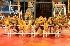 cirkuszi állatok – Google Kereső Fair Grounds, Google