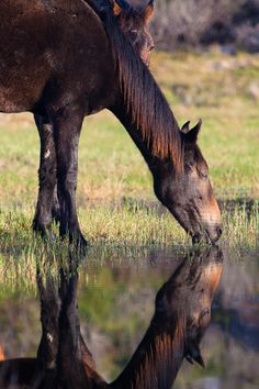 The beautiful Wild Horses of the Bot River Lagoon Hermanus District Cape Whales Coast South Africa All The Pretty Horses, Beautiful Horses, Animals Beautiful, Horse Photos, Horse Pictures, Horse Love, Horse Girl, Horse Anatomy, Majestic Horse