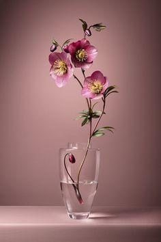 Hd Flowers, Flowers Nature, Exotic Flowers, Beautiful Flowers, Ikebana Flower Arrangement, Vase Arrangements, Flower Vases, Hd Flower Wallpaper, Wallpaper Nature Flowers