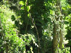 Makiki Forest Preserve - Oahu