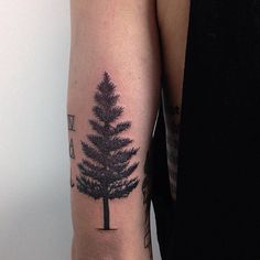 30 Simple and Easy Pine Tree Tattoo Designs for Natural living