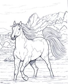 Coloring Pictures Of Horses Fresh Horse Coloring Pages for Adults Best Coloring Pages for Kids Horse Coloring Pages, Coloring Pages To Print, Printable Coloring Pages, Colouring Pages, Adult Coloring Pages, Coloring Pages For Kids, Coloring Books, Kids Coloring, Free Coloring