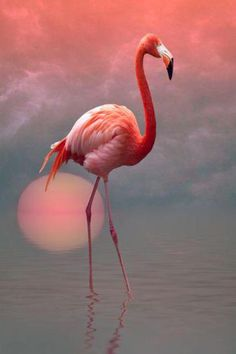 The thing is that, Flamingos are tropical wading birds that are pink in color, which makes them one of the most beautiful, and unique birds in the world. Flamingo Painting, Flamingo Art, Pink Flamingos, Flamingo Color, Painting Abstract, Pretty Birds, Beautiful Birds, Animals Beautiful, Cute Animals