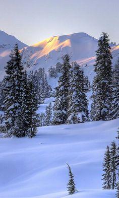 JayArr Coffee - Andrea Galatea - Re-Wilding Winter Szenen, Winter Magic, Winter Photography, Landscape Photography, Nature Photography, Travel Photography, Skier, Forest Scenery, The Beast