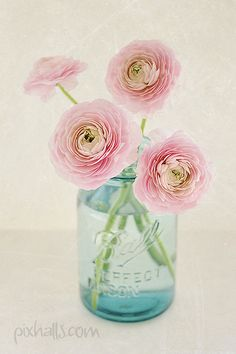Spring pink ranunculus... | Flickr - Photo Sharing! | We Heart It
