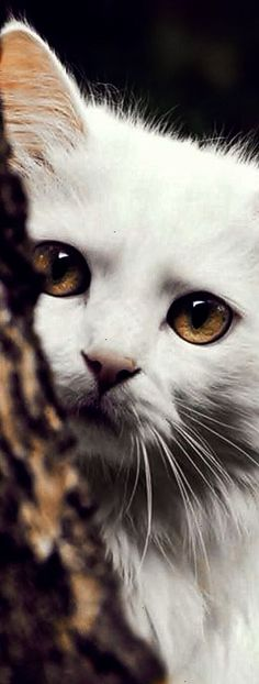 Hermosa fotografía de una gata. #zz #zwyanezad