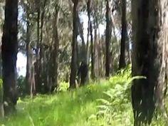 'Yowie' (Bigfoot) Caught On Film?