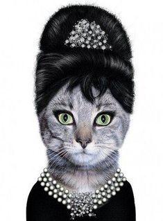 Audrey Hepburn Kitty