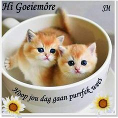 Good Morning Wishes, Good Morning Quotes, Afrikaanse Quotes, Goeie More, Cards, Mornings, Caption, Child, Inspirational