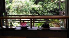 雨でございます おります  #箕面 #日本茶 #CHAnoMA #Minoo #Matcha #日本酒 #抹茶 #煎茶 #箕面ビール #古本#ブックカフェ#ひなたブック