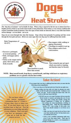 Dogs & Heat Stroke - Know the signs Take a Pet First Aid class - http://www.pettech.net/index.php