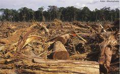 Amazônia...desmatamento,realidade