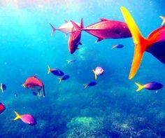 Diving the Great Barrier Reef.... #fish #diving #underwater #underwaterworld #water #saltwater #colourful #ocean #cairns #qld #australia #greatbarrierreef #queensland  #colours #colour #nofilter #reef #oz #oceanlife #nature #oceanlove #fnq by sonjab977 http://ift.tt/1UokkV2