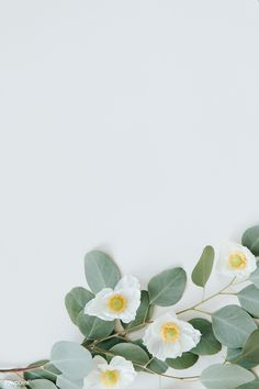 White Iphone Background, Leaf Background, Background Patterns, Flower Phone Wallpaper, Eucalyptus Leaves, Blue Aesthetic, Plant Aesthetic, Blue Leaves, Flower Backgrounds