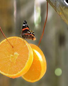 MeaColpa » Σας αρέσουν οι πεταλούδες;