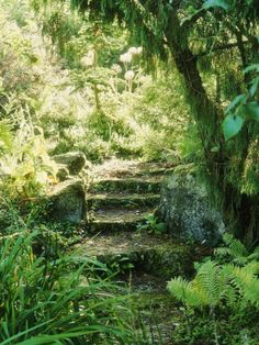 Moss covered stone steps