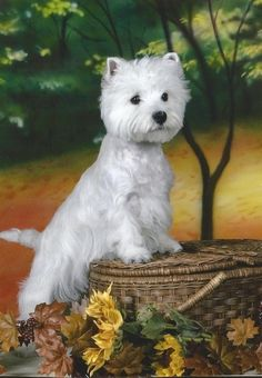 If I wasn't such a large dog person, I'd love one of these little dogs - adorable